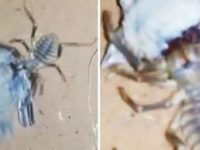 desert-spider