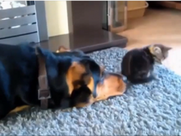 dogs-and-cats-friendships-thumb