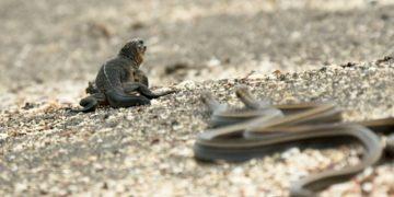 iguana-vs-snake