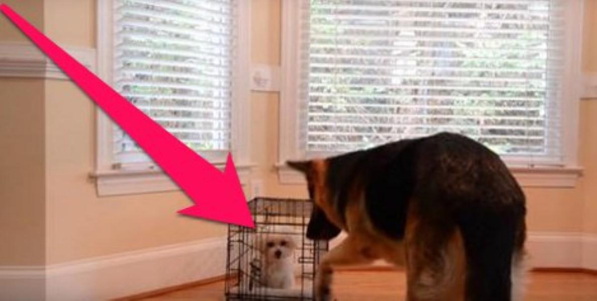 puppy-escape