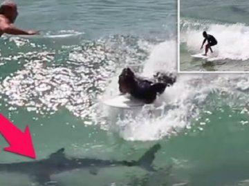 surfs-over-shark